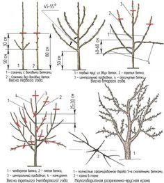 Bonsai Pruning, Pruning Fruit Trees, Tree Pruning, Bonsai Garden, Summer House Garden, Lawn And Garden, Farm Gardens, Outdoor Gardens, Grape Plant