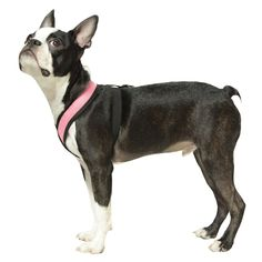 Gooby Choke Free Comfort X Soft Harness Large Pink