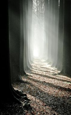 penombra tra gli alberi - fotografia in bianco e nero/ black and white photography. Just beautiful. Beautiful World, Beautiful Places, Beautiful Pictures, Beautiful Forest, Amazing Places, Landscape Photography, Nature Photography, Mysterious Photography, Shape Photography
