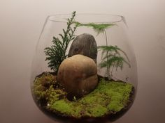 My first trying for terarium.