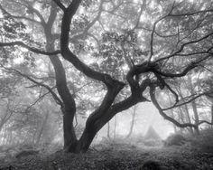 """misty morning"" from nature on desktopnexus by Nessa~Art"