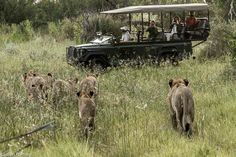 What Not to Do on an African Safari: The Top Five Tourist Mistakes || Jaunted