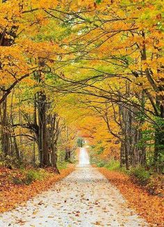 Autumn trail (Vermont) by Enzo Figueres