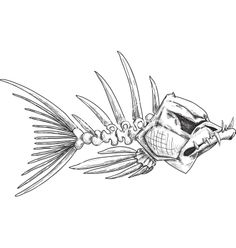 Sketch of evil skeleton fish with sharp teeth vector 1262133 - by sharpner on VectorStock®