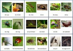 Themakaarten dieren - kriebelbeestjes ~ Juf Milou