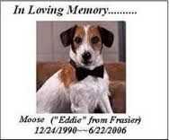 """Moose, the Jack Russell Terrior who originated the role of Martin Crane's opinionated dog Eddie on """"Frasier,"""" was so spunky and mischievous in real life that his first family couldn't handle him. Moose proved such a natural at acting that he scored his breakthrough role on """"Fraiser,"""" just six months into his training. His son Enzo ultimately took over the role from him. The two also also starred together in the film, """"My Dog Skip.Moose ultimately died of natural causes in June 2006. He was…"""