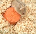 How to Care for Syrian Hamsters: 10 Steps - wikiHow. Good tips. Includes list of produce to NOT feed them. K