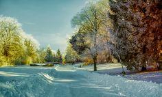 Frozen park - null