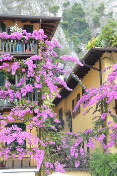 Just some pretty purple flowers agains some yellow walls in Limone sul Garda at Lake Garda. Loving Italy in summer Summer 3, Lake Garda, Yellow Walls, Purple Flowers, Photo S, Italy, Places, Pretty, Travel