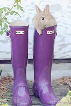 Can't decide on which do i want more -- the bunny or the hunter boots?