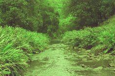 - acampamento cachoeira de mandaguari. verdes variados.