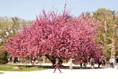 The most beautiful tree in paris