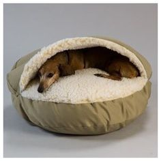 Burrow dog bed for my dachshund