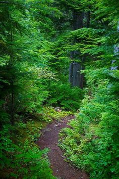 Paths thru The Forest Forest Path, Tree Forest, Forest Trail, Wild Forest, Forest Mountain, All Nature, Walking In Nature, Nature Tree, Flowers Nature