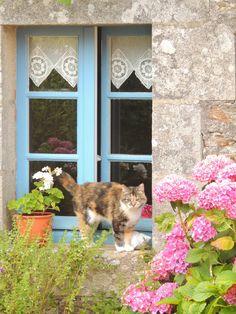 Fenêtre bretonne Photo personnelle