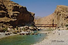 Camels in the Bolan Pass, Balochistan_ West Pakistan