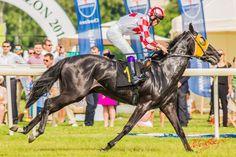 Gala Derby na Warszawskim Służewcu 2014 Derby, Horses, Animals, Animales, Animaux, Animal, Animais, Horse