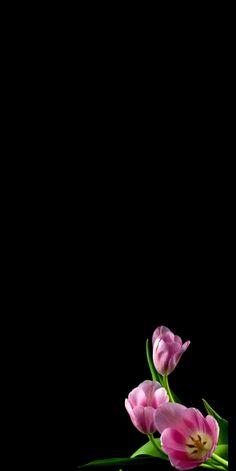 mennyfox55- mennyfox55  Tulips  -#BackTattooscross #BackTattooslion #BackTattoosred #BackTattoosvrouw #girlBackTattoos Wallpaper Nature Flowers, Flower Background Wallpaper, Beautiful Flowers Wallpapers, Beautiful Nature Wallpaper, Background Pictures, Flower Backgrounds, Beautiful Roses, Black Phone Wallpaper, Phone Wallpaper Images