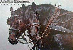 Draft Horse Limited Edition Prints from artist Adeline Halvorson