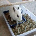 DIY Rabbit Hay Tray