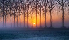 Sunrise through trees.