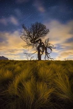 Methusalem Photo by Karsten Hoenack -- National Geographic Your Shot