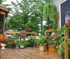 Un Jardín en tu patio , terraza o balcón. Crees que no es posible??, no importa el espacio que tengas en tu casa, le puedes dar un aspecto y ambientación de un pequeño jardín, sólo con el agregado de algunas macetas, jardineras, y variedades de plantas de fácil cultivo.