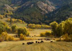 #trees #forest #art CLYDE ASPEVIG Spring Hill Meadows Oil on Canvas 36″ x 50″