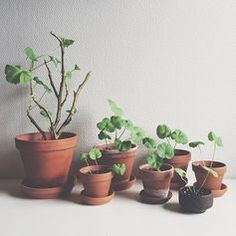 potted plants |