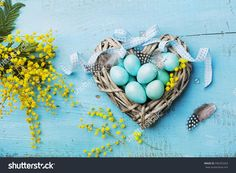 Painted Easter eggs in heart nest and mimosa flower on vintage blue background top view in flat lay style.