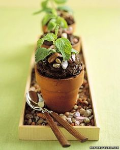 These are even BETTER potted cupcakes, Chocolate with a mint leaf
