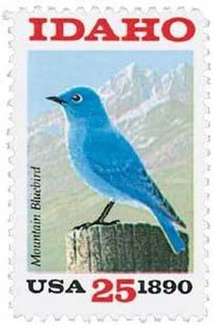 USA-Idaho - Pájaro Azul de las Montañas