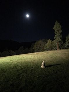 The goodest girl passed away last night. In her final hours she went away and stared at the moon.   http://ift.tt/2nGdTDa via /r/dogpictures http://ift.tt/2oDu5KB  #lovabledogsaroundtheworld