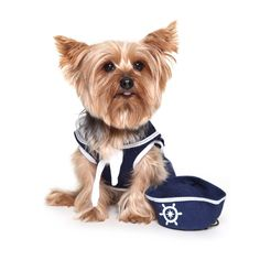 Pet Brands Dog Shirt With Hat Sailor.Made from the highest quality mix of cotton, polyester and spandex for a comfortable fit. Product Dimensions: Extra Small - 10 x 13 cm Small - 13 x 18 cm Medium - 15 x 20 cm Dogs On Boats, Sailor Shirt, Dog Shirt, Teddy Bear, Pets, Shirts, Animals, Nautical, Spandex