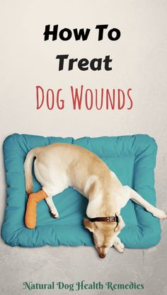 Learn how to treat dog wounds such as stopping bleeding from a wound, dressing the wound, and using natural remedies such as herbs, homeopathy, and nutritional supplements to promote would healing. Road Rash Treatment, Dog Clicker Training, Dog Training, Dog Illnesses, Sick Dog, Can Dogs Eat, Diy Stuffed Animals, Dog Care, Your Dog