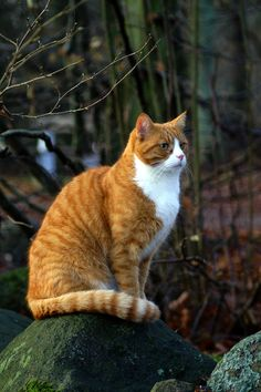 Pretty Cats, Beautiful Cats, Cute Cats And Kittens, Cool Cats, Cat Heaven, Cat Reference, Warrior Cats Art, Orange Tabby Cats, Tier Fotos