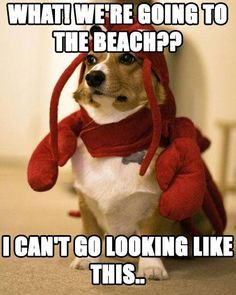 https://www. funny dog pictures - Google Search