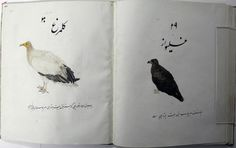 Double view of 1974,0617,0.16.44 and 1974,0617,0.16.45. on right (1974,0617,0.16.44): album leaf. a vulture and urdu inscription. painted in gouache on paper. according to register, folio 44. on left (1974,0617,0.16.45): album leaf. a vulture and urdu inscription. painted in gouache on paper. according to register, folio 45.