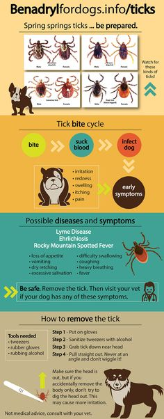 Complete Dog Tick Removal and Prevention Mosquito Repellent For Dogs, Bite Relief, Ticks On Dogs, Tick Bite, Dog Poster, Dog Travel, Pet Life, Alternative Health, How To Stay Healthy
