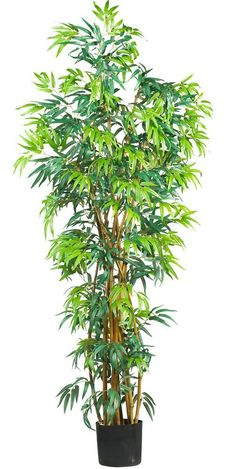 Amazon.com: Nearly Natural 5188 Curved Bamboo Silk Tree, 6-Feet, Green: Home & Kitchen