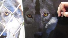 Painting a Gray Wolf in acrylics - YouTube