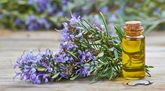 Herbal Oil: Rosemary Oil Benefits and Uses Natural Home Remedies, Herbal Remedies, Lice Remedies, Flea Remedies, Rosemary Oil For Hair, Rosemary Plant, Essential Oils For Hair, Diy Shampoo, Herbal Oil