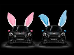 Easter bunnies coming soon;-)