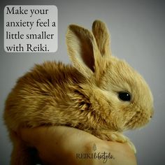 Essential oils are potent and can be dangerous if misused. Find out what essential oils are safe for rabbits and which ones are not. Also discover some great ways to care for your rabbit using essential oils. Cute Baby Bunnies, Cute Babies, Cutest Bunnies, Bunny Bunny, Baby Animals, Cute Animals, Small Animals, Funny Animals, Bunny Names