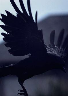Odin's Crow