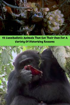 15 #Cannibalistic #Animals That #Eat Their #Own For A Variety Of Disturbing Reasons