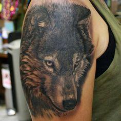 """Wolf shot by @gallosantiago _____"""