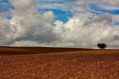 Alentejo fotografia de Luís Reininho #landscape_captures #landscapestyleshigh #landscapes #landscape #landscapehunter #landscapestylesgf #tree_magic #worldwide_family #lonely_tree_love #tree_magic #worldwide_family by luis_reininho