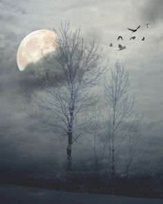 moon and tree images - Google Search