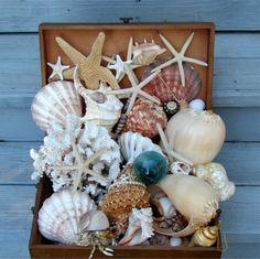 treasure chest of seashells